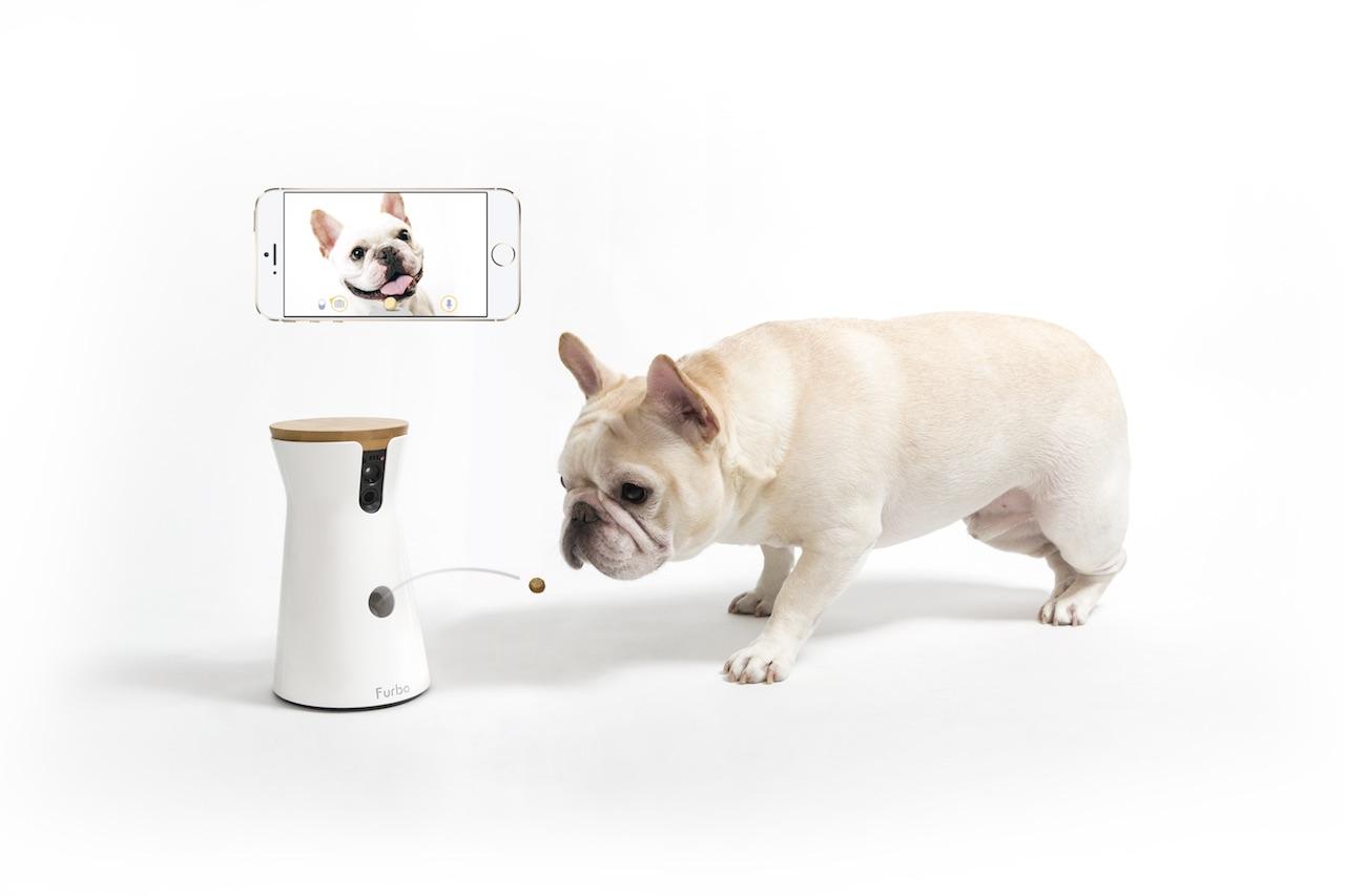 犬,留守番カメラ