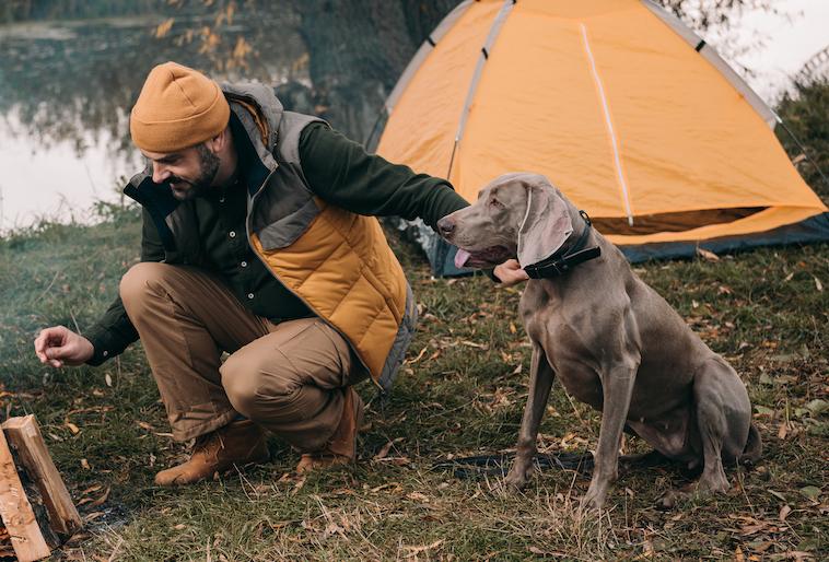 【長生きの秘訣は趣味(役割)をもつこと】10歳を超えてキャンプを楽しむ犬たち