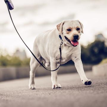 「人と犬との絆の9割は散歩によって築かれる」心に刺さるシーザー・ミランの名言集