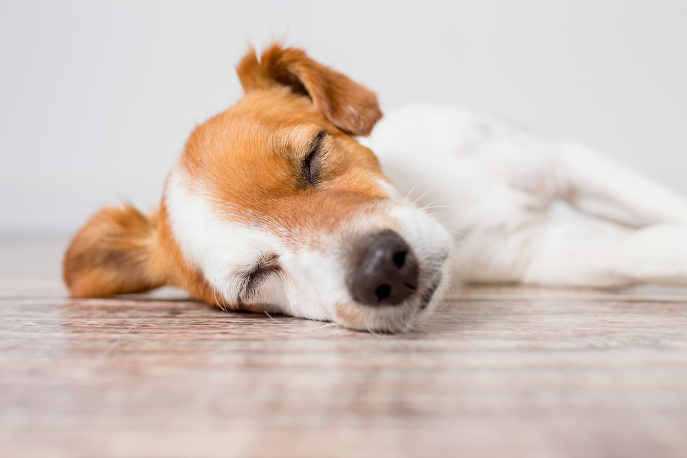 犬,熱中症
