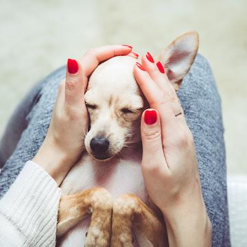 """【プロドッグトレーナー監修】愛犬が""""けいれん""""を起こしたら、まず飼い主がとる行動とは"""