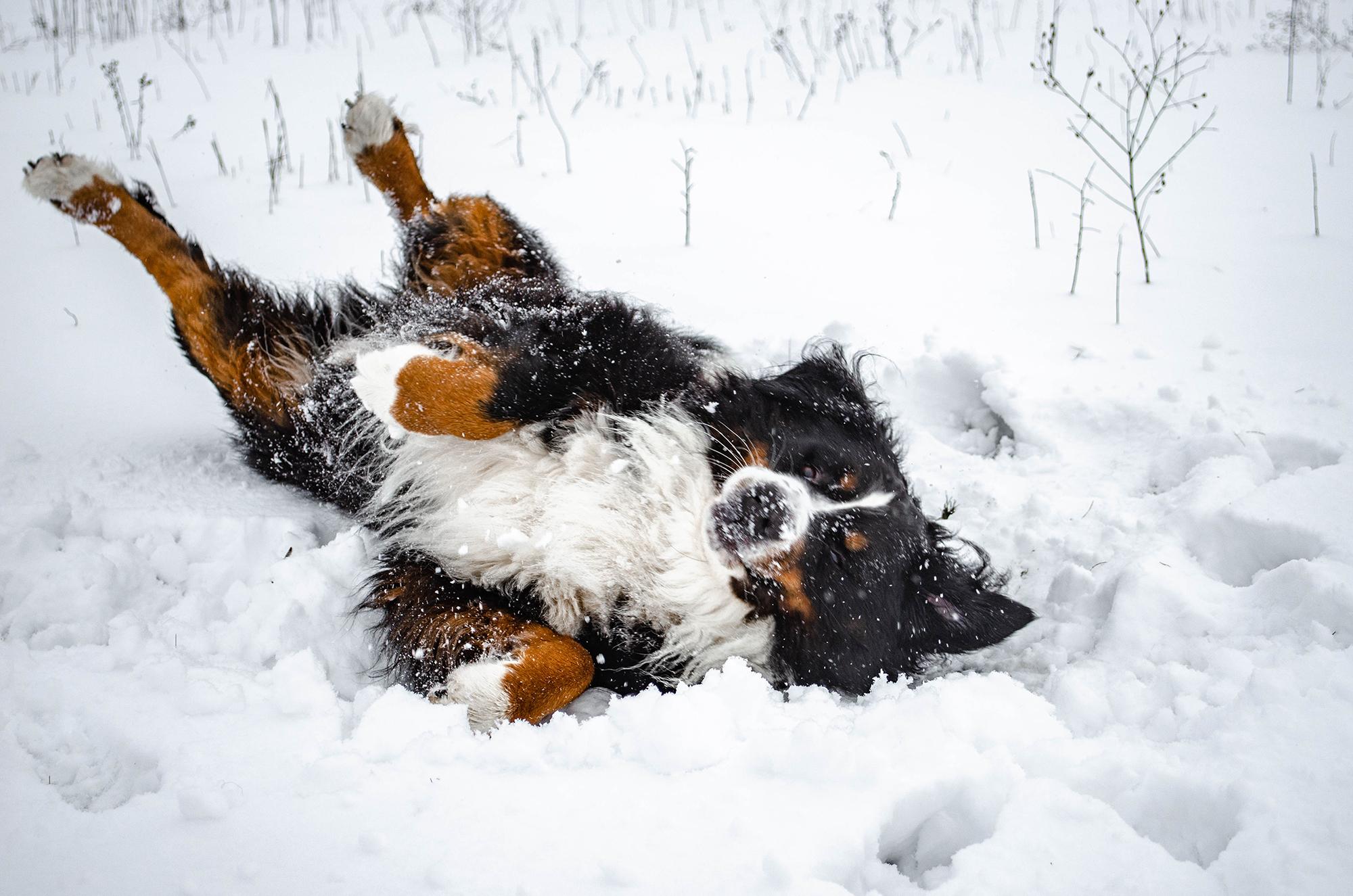 やっぱり運動が一番!冬は愛犬が楽しめるアクティビティが満載