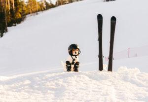 愛犬とスキーに行ってみる