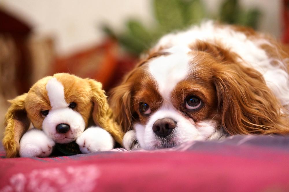 そのおもちゃ、大丈夫?愛犬のおもちゃは「頑丈・大きい・シンプルデザイン」を選ぼう