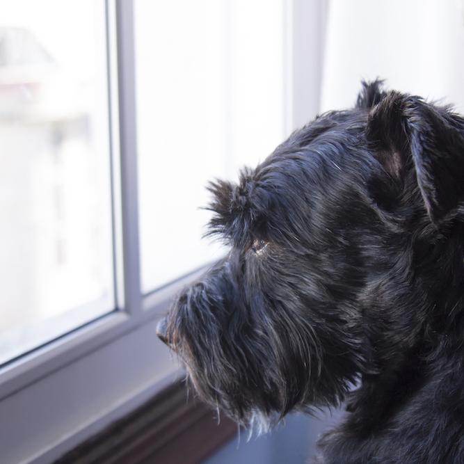 【犬の分離不安】テレワークで愛犬と過ごす時間が増えた今。お留守番の再開で愛犬を分離不安にさせないためには