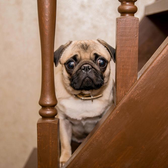 海外のオーナーに学ぶ!愛犬に階段の上り下りを教えるときは「励まし続けること・大げさに褒めること」を忘れずに【動画あり】
