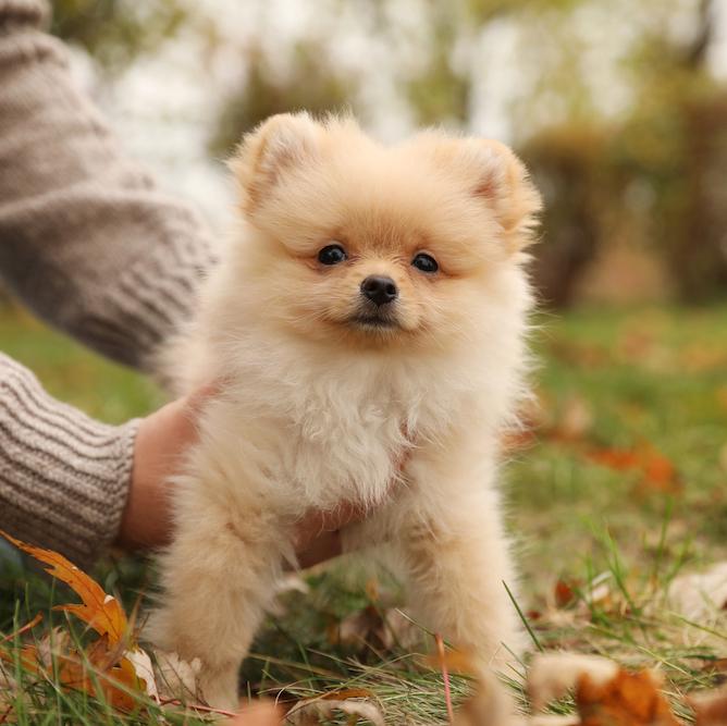 【最高の相棒と、最高のお散歩を】愛犬のお散歩を楽しむコツは、小学校時代にタイムスリップすること!